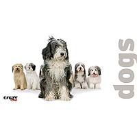 [해외]STT SPORT Crazy Towel Dogs Terry Loop White