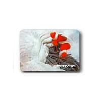 [해외]BEST DIVERS Magnet White Clown Fish 8 Pcs